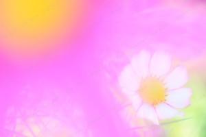 色彩のなかで咲く花に想いを寄せた。 淡い可憐な姿が印象的